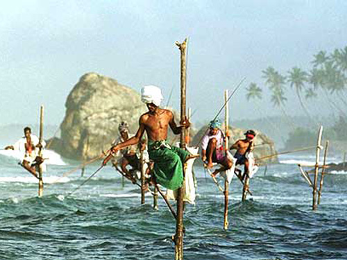 1805-stilt_fishermen_sri_lanka